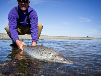 Sea-Run Brown Trout - Release