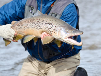 Sea-Run Brown Trout | Rio Grande Fly fishing in Argentina